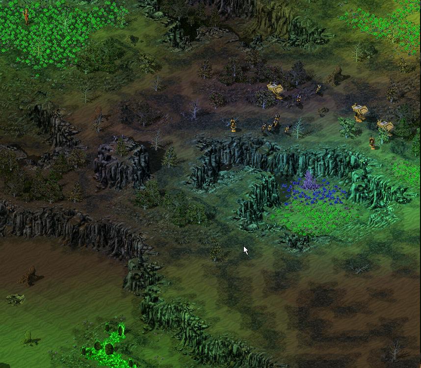 evergreen7.jpg